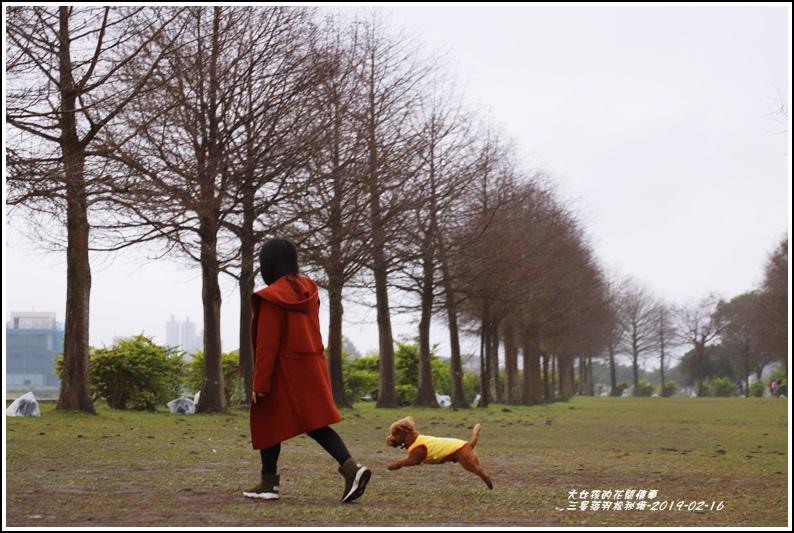三星落羽松秘境-2019-02-15.jpg