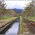 興泉圳(富源國中)黃花風鈴木-2019-02-06.jpg