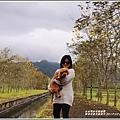 興泉圳(富源國中)黃花風鈴木-2019-02-08.jpg