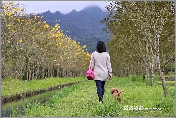 興泉圳(富源國中)黃花風鈴木-2019-02-13.jpg