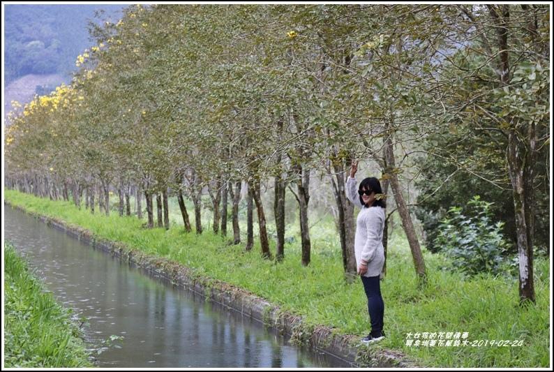興泉圳(富源國中)黃花風鈴木-2019-02-33.jpg