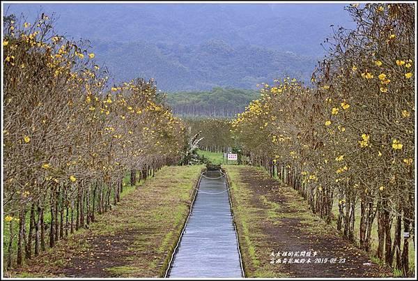 興泉圳(富源國中)黃花風鈴木-2019-02-41.jpg