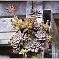 赤柯山加蜜園-2019-03-22.jpg