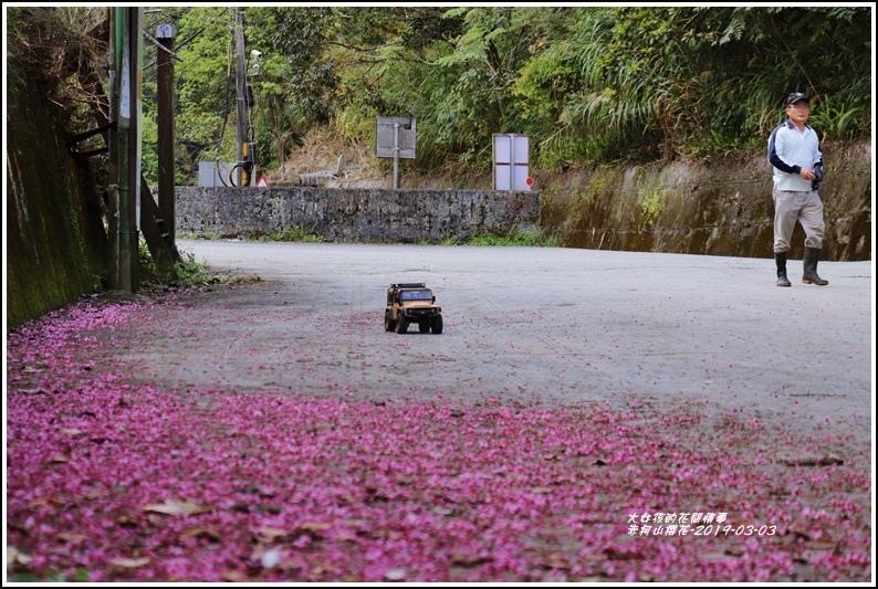 赤柯山櫻花-2019-03-09.jpg