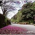 赤柯山櫻花-2019-03-11.jpg