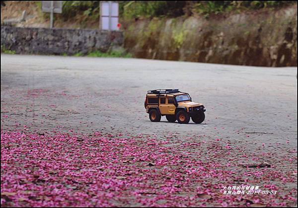 赤柯山櫻花-2019-03-10.jpg