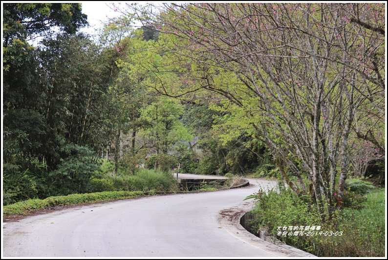 赤柯山櫻花-2019-03-14.jpg