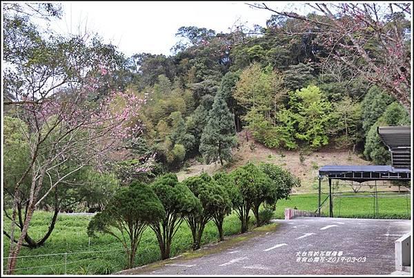 赤柯山櫻花-2019-03-15.jpg
