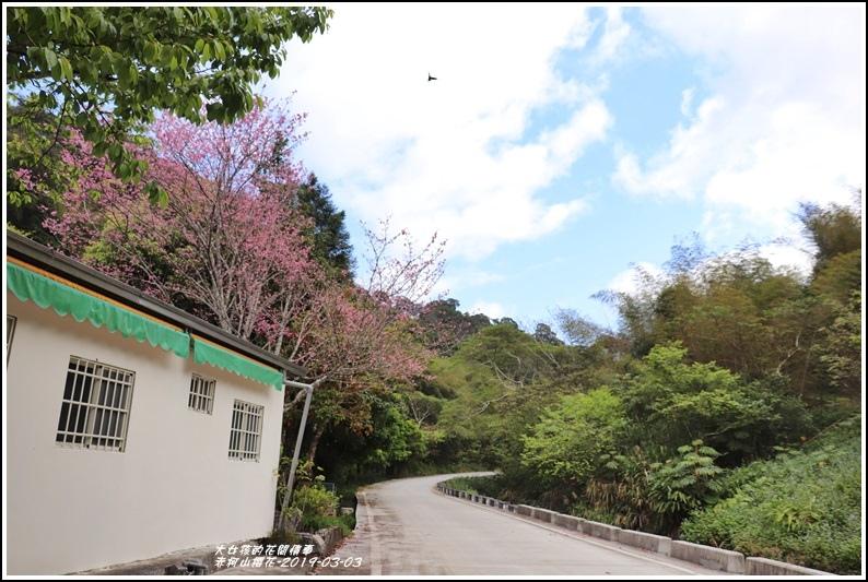 赤柯山櫻花-2019-03-16.jpg