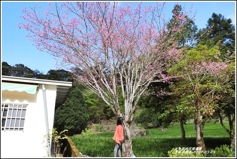 赤柯山櫻花-2019-03-20.jpg