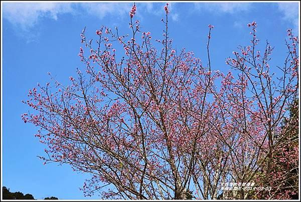 赤柯山櫻花-2019-03-21.jpg