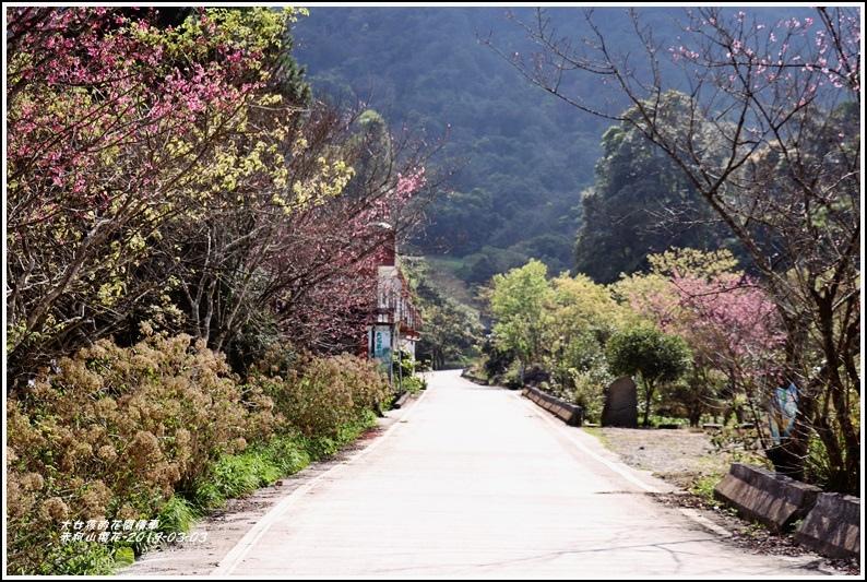 赤柯山櫻花-2019-03-23.jpg