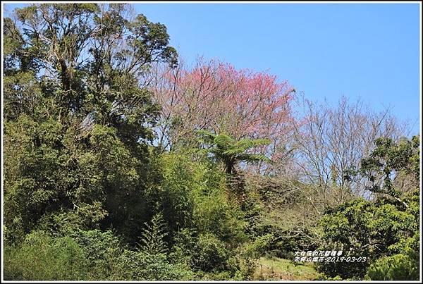赤柯山櫻花-2019-03-31.jpg