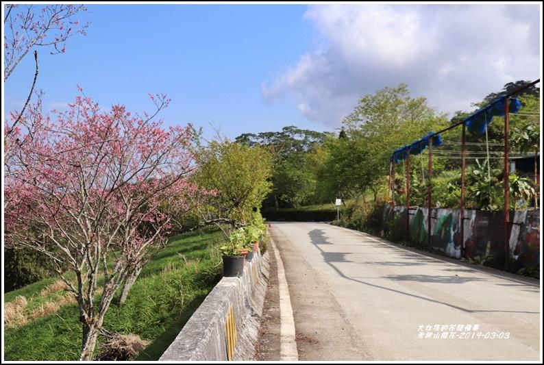 赤柯山櫻花-2019-03-39.jpg