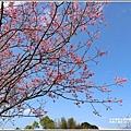 赤柯山櫻花-2019-03-40.jpg