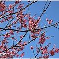 赤柯山櫻花-2019-03-42.jpg