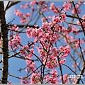 赤柯山櫻花-2019-03-41.jpg