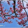 赤柯山櫻花-2019-03-43.jpg