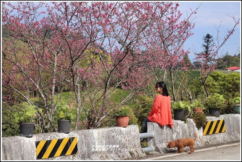 赤柯山櫻花-2019-03-45.jpg