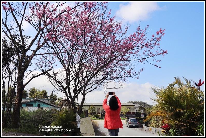 赤柯山櫻花-2019-03-50.jpg