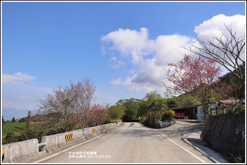 赤柯山櫻花-2019-03-53.jpg