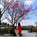 赤柯山櫻花-2019-03-51.jpg