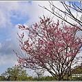 赤柯山櫻花-2019-03-54.jpg
