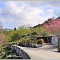 赤柯山櫻花-2019-03-56.jpg