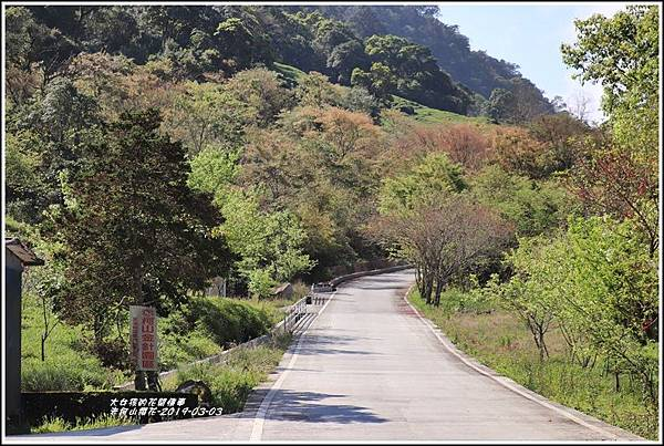 赤柯山櫻花-2019-03-68.jpg