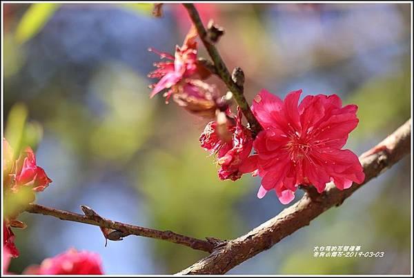 赤柯山櫻花-2019-03-72.jpg