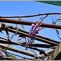 赤柯山加蜜園-2019-03-54.jpg