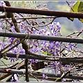 赤柯山加蜜園-2019-03-55.jpg
