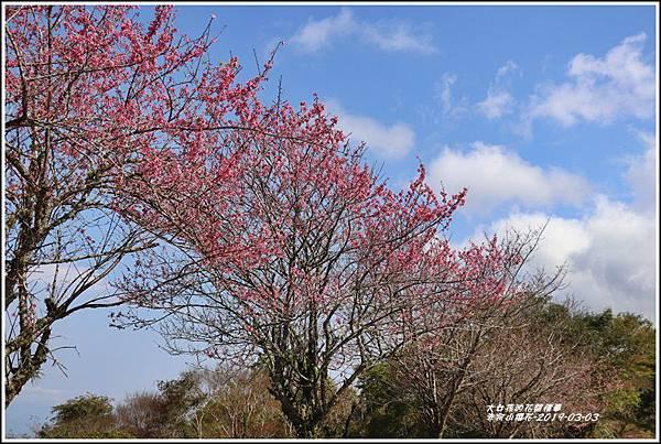 赤柯山櫻花-2019-03-77.jpg