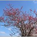 赤柯山櫻花-2019-03-78.jpg