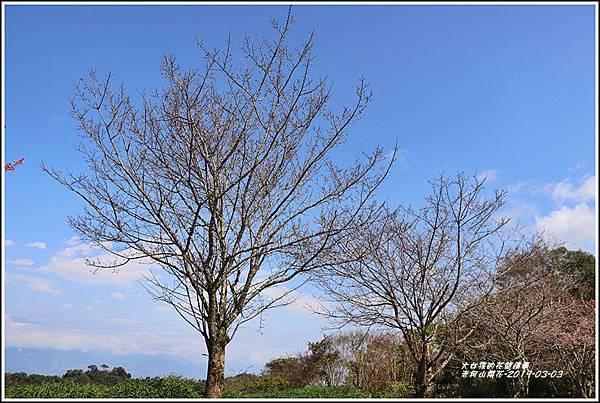 赤柯山櫻花-2019-03-79.jpg