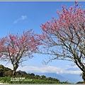 赤柯山櫻花-2019-03-80.jpg