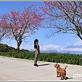 赤柯山櫻花-2019-03-81.jpg