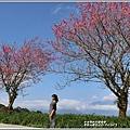 赤柯山櫻花-2019-03-82.jpg