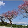 赤柯山櫻花-2019-03-84.jpg