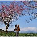 赤柯山櫻花-2019-03-85.jpg