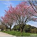 赤柯山櫻花-2019-03-86.jpg