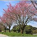 赤柯山櫻花-2019-03-87.jpg