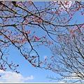 赤柯山櫻花-2019-03-89.jpg