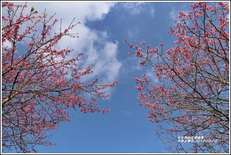 赤柯山櫻花-2019-03-90.jpg