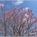 赤柯山櫻花-2019-03-92.jpg