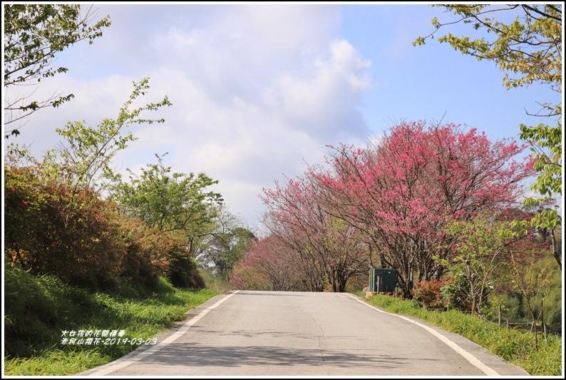赤柯山櫻花-2019-03-96.jpg