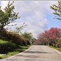 赤柯山櫻花-2019-03-97.jpg