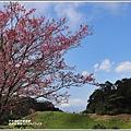 赤柯山櫻花-2019-03-105.jpg