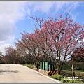 赤柯山櫻花-2019-03-108.jpg