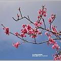 赤柯山櫻花-2019-03-126.jpg